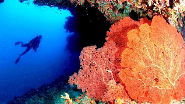 Подводные сады на Мальдивах