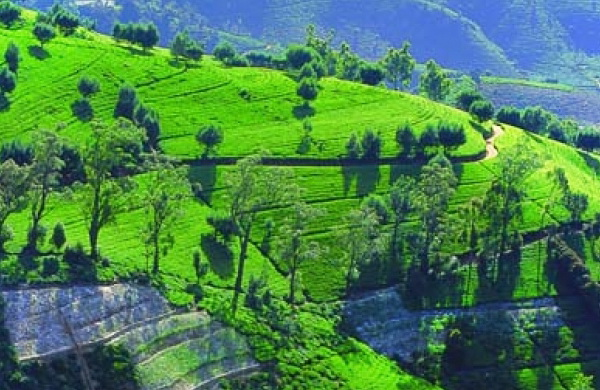 Отпуск на Шри-Ланке Туры на 2014