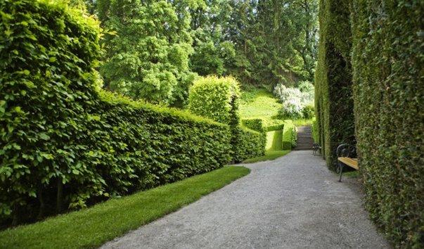 Ботанический сад Инсбрукского Университета
