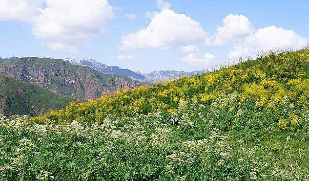 Чаткальский горно-лесной  заповедник