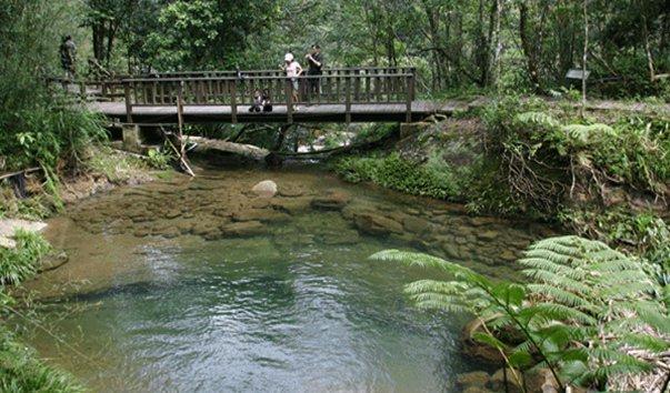 Экологический парк Shenlong