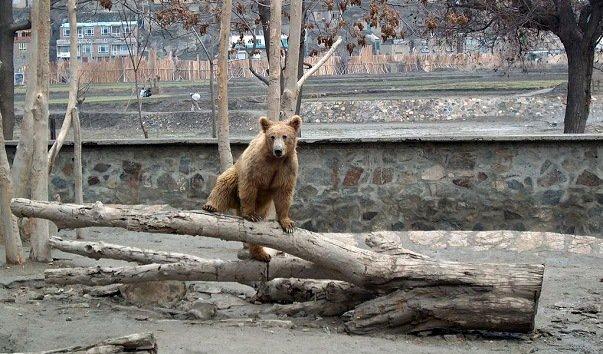 Кабульский зоопарк