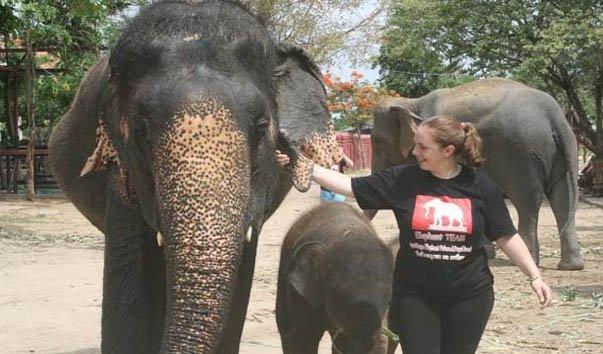 Лагерь для слонов Elephantstay
