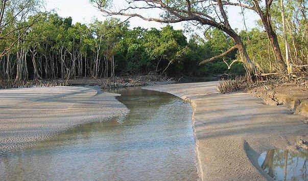 Мангровый лес Сундарбан