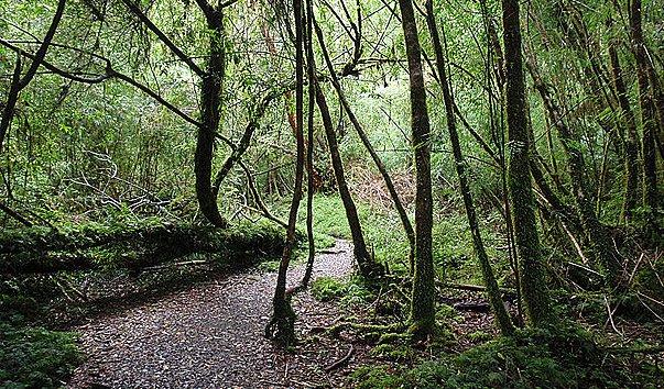 Национальный  парк Алерсе Андино