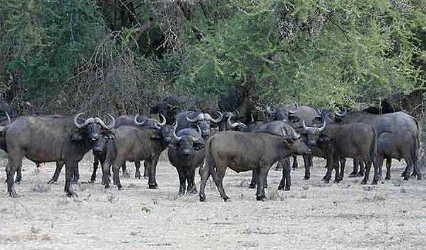 Национальный парк Okomu