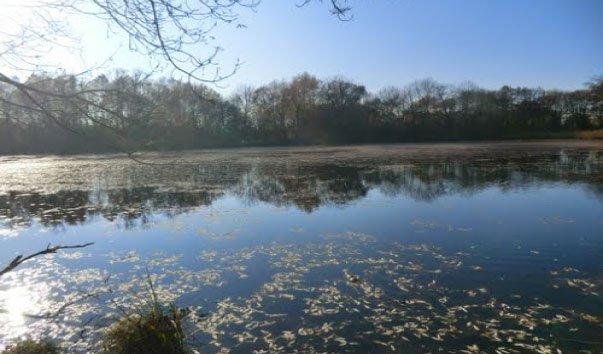 Озеро Denkendorfer Erlachsee