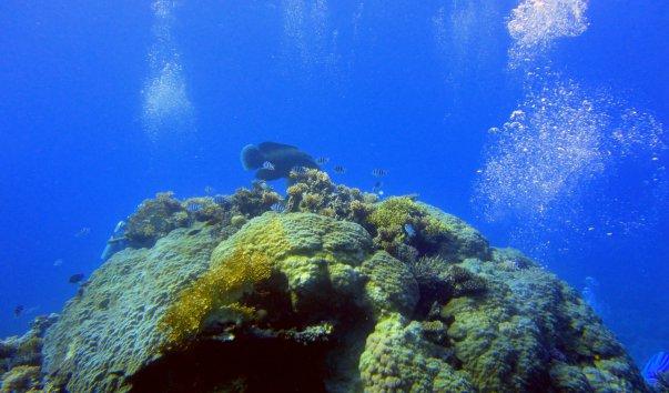 Риф Turtle Bay