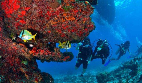 Рифы Санта Роза
