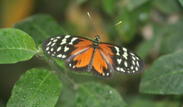 Сад бабочек в Шлосспарке