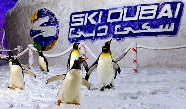 Шоу «Дружеские встречи с пингвинами» в Ski Dubai