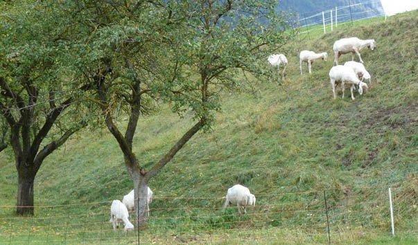 Завод по переработке овечей шерсти Умхаузен