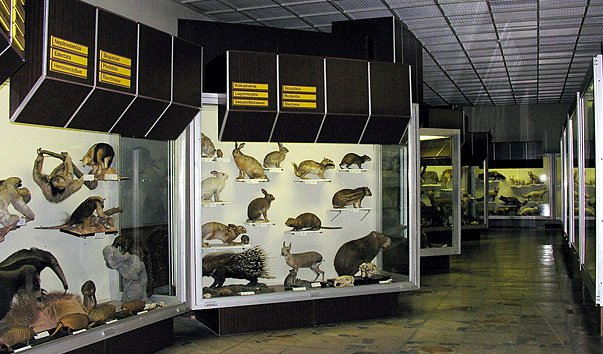Зоологический музей имени Тадaса Иванаускаса