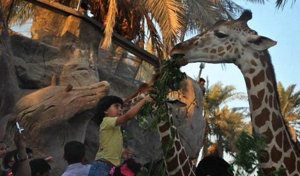 Зоопарк Family and Kids