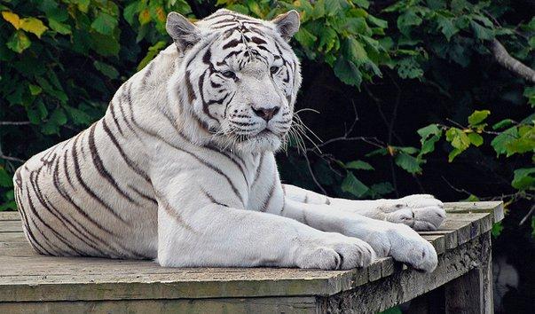 Зоопарк Колчестера